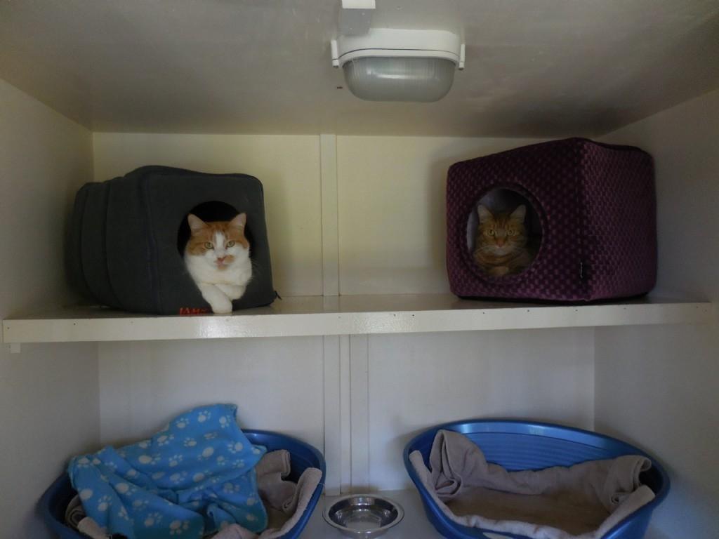 Simon & Lulu
